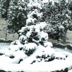[تصویر:  iranshahrsaz.com_تصویر-65.jpg]