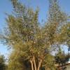 [تصویر:  iranshahrsaz.com_p31-www-iranshahrsaz-co...-shahr.jpg]